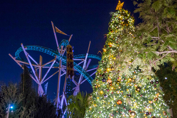 Enjoy Christmas lights and fun rides including cheetah hunt at Busch Gardens Tampa