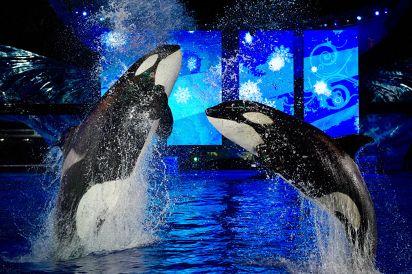 Shamu's Christmas Miracle show at SeaWorld Orlando