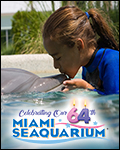 Miami Seaquarium Dolphin Encounter
