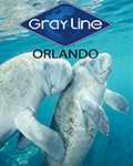 Swim Where the Manatees Live by Gray Line Orlando